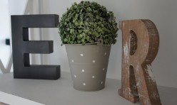 le buis porte bonheur qui vous accueille dans cette maison flamande en location meublée à Villeneuve d'Ascq